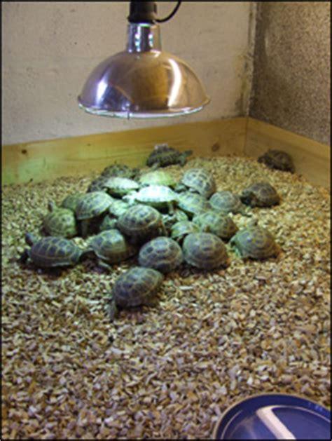 tortoise bedding tortoise bedding 28 images pettex reptile bedding 10 l