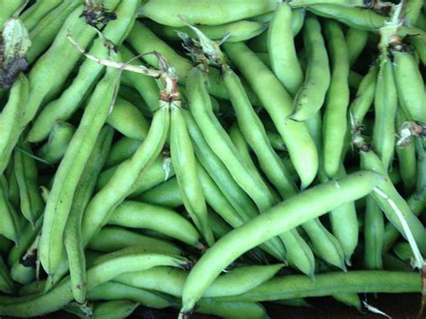 fava beans recipes from nash s organic produce