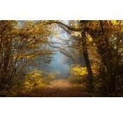 Nature Landscape Fall Forest Sunlight Mist Shrubs