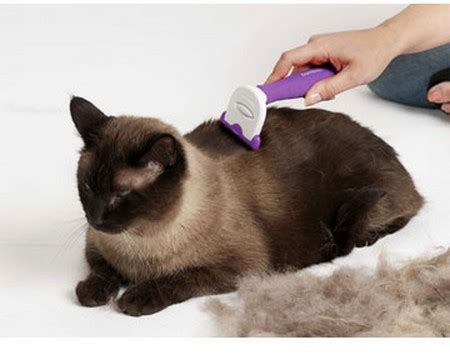 Cats And Shedding by How To Stop Your Cat Shedding Hair