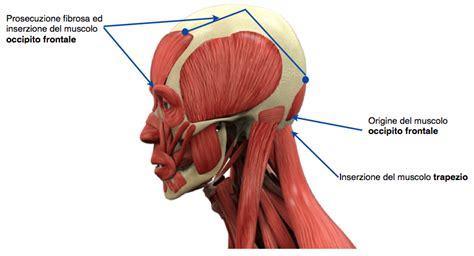 cervicali e giramenti di testa i sintomi l altra riabilitazione