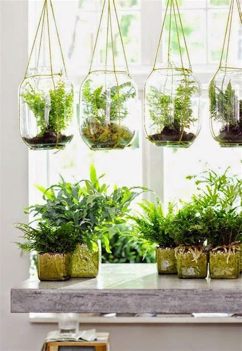 diy plant ideas  fall hanging plants indoor