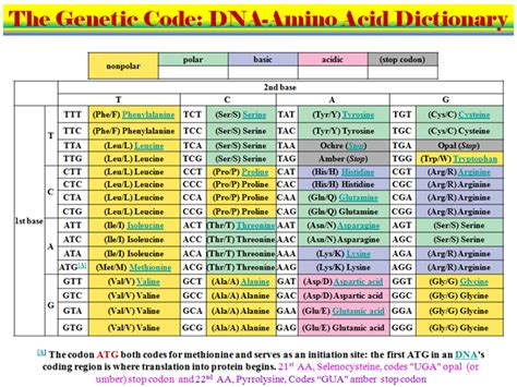 Genetic Modification Dictionary by 2 2 10 Synthesis Of α Amino Acids