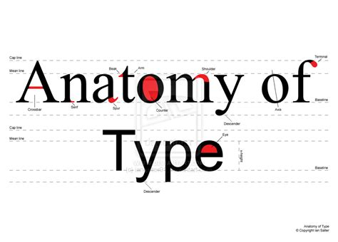 typography anatomy poster projects typography