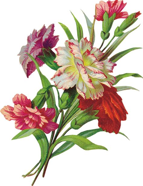 imagenes en png de flores flores png photoshop imagui
