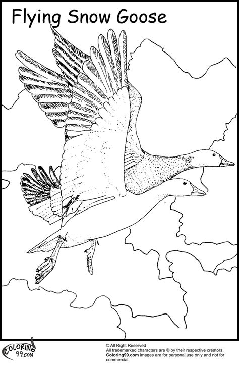 coloring pages of animals that migrate nene goose coloring page state drawings 10 pics of hawaii