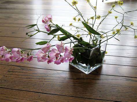 potare orchidea orchidee come potare un orchidea
