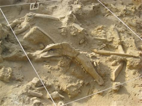 the bone bed west coast fossil park past climate and ancient ecosystems