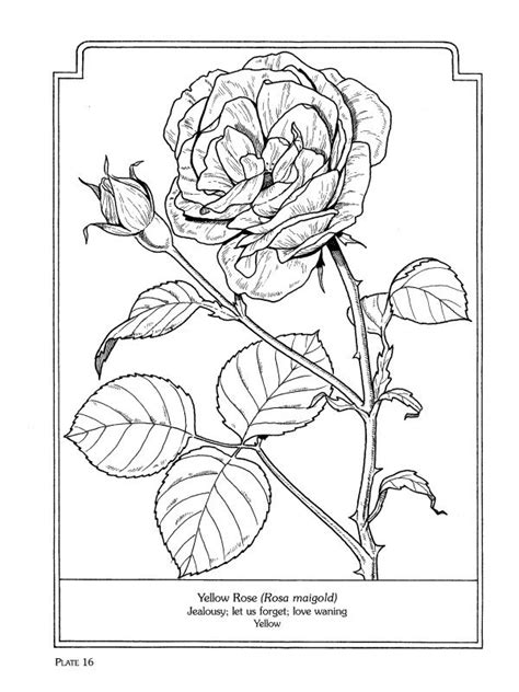 cenefas mandalas the language of flowers coloring book dover coloring