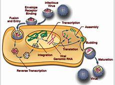 The RCAS System — Viral Replication and Behavior Retrovirus