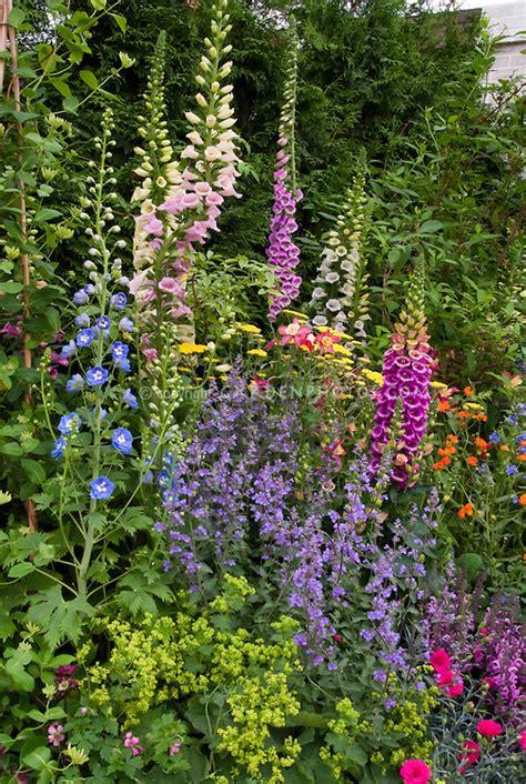 Perennial Flower Garden Colorful Plant Flower Stock Flowers For Gardens Perennials