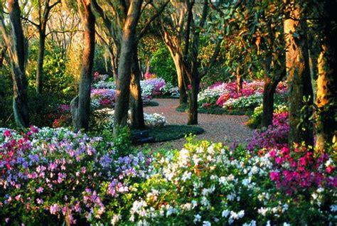 best small flower garden goodhomez com 17 best images about shade under pine trees on pinterest