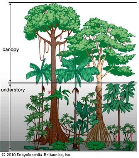 tropical rainforest population and community development