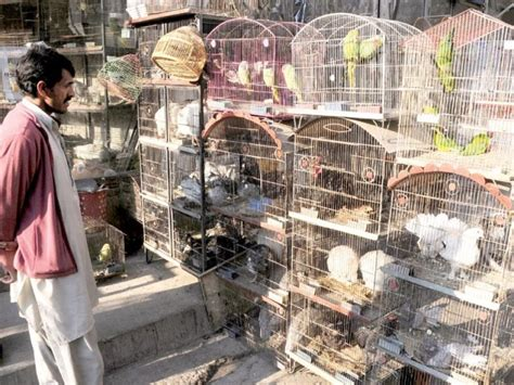 in pindi a market where birds of all colours and species