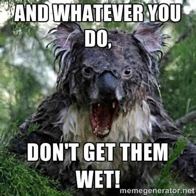 Wet Meme - evil koala bear meme www pixshark com images galleries