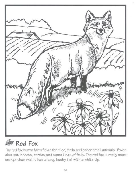 fox coloring page for adults adult fox coloring pages