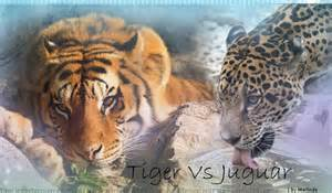 Jaguars Vs Tigers Tiger Vs Jaguar By Marlinderooz On Deviantart