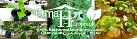 Jual Bibit Gurami Surabaya hidroponik surabaya nutrisi hidroponik net pot bibit