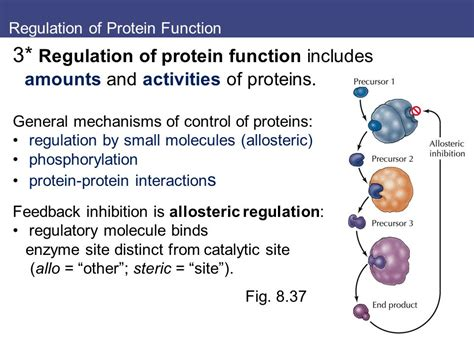 8 protein functions 8 protein synthesis processing and regulation ppt