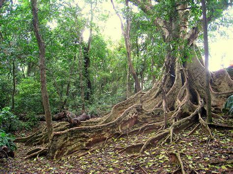 Amazonas Regenwald Pflanzen by A La Recherche De La Lumi 232 Re