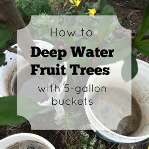 best way to water fruit trees watering in a drought janky style forgotten skills