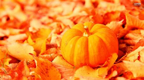pumpkin background pumpkin wallpaper backgrounds wallpaper cave