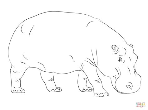 free coloring pages hippo fantasia coloring pages hippo coloring pages