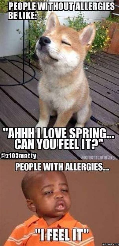 Allergy Meme - cat allergy meme www imgkid com the image kid has it