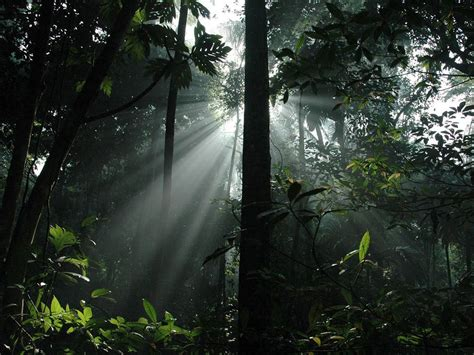 What Does Canopy In The Rainforest Sunlight In The Forest