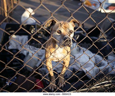 junkyard dogs junkyard stock photos junkyard stock images alamy
