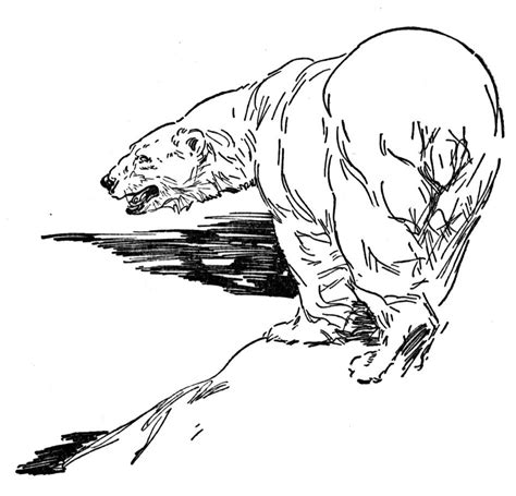 sun bear coloring pages free coloring pages of sun bears