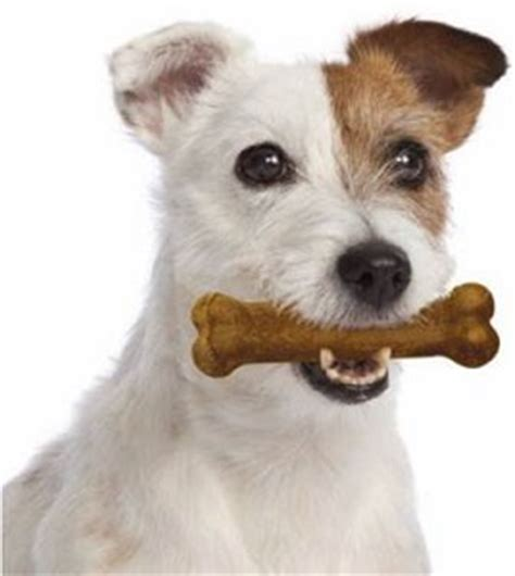 safe chews are nylabone chews safe for dogs