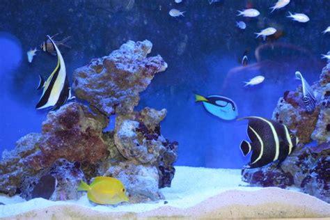 imagenes de uñas tipo pecera las especies de peces ideales para tu primer acuario