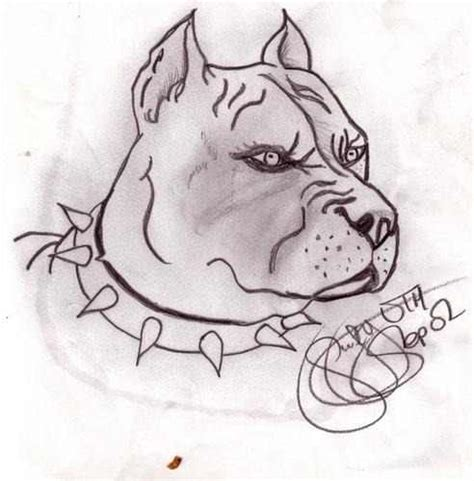 imagenes para dibujar de perros pitbull pitbull para dibujar a lapiz faciles imagui