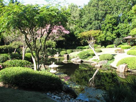 Mt Cootha Botanic Gardens File Japanese Gardens At Mt Coot Tha Jpg Wikimedia Commons