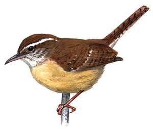 south carolina state bird images
