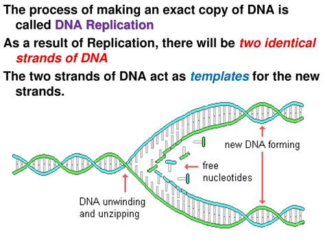 chapter 8 from dna to proteins ppt video online download