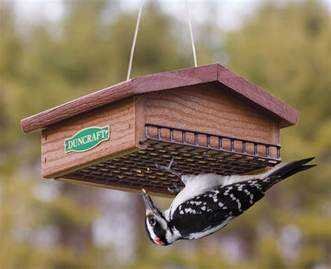 discouraging starlings grackles duncraft s wild bird