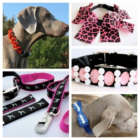 pet accessories the 10 coolest accessories you should pet paw