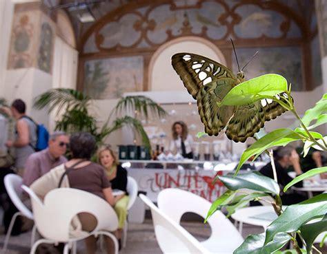 madama butterfly flo n the go flo n the go tea with butterflies flo n the go flo n the go