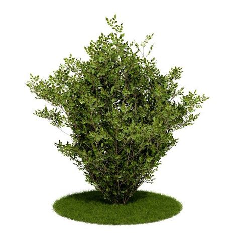 shrub bush and grass 3d model cgtrader com