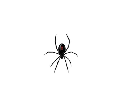 black widow spider art cliparts co