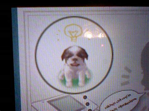 nintendogs shih tzu shih tzu nintendogs wiki fandom powered by wikia