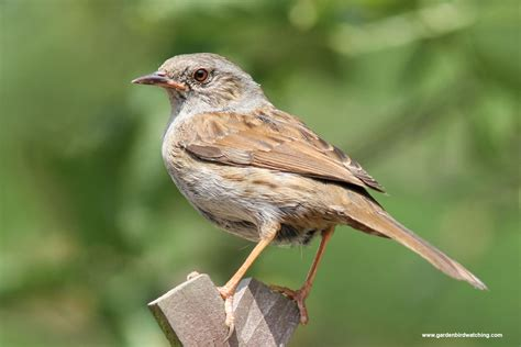 Your House by Dunnock