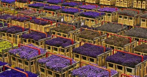 aalsmeer mercato dei fiori the unique flower auction at aalsmeer amusing planet