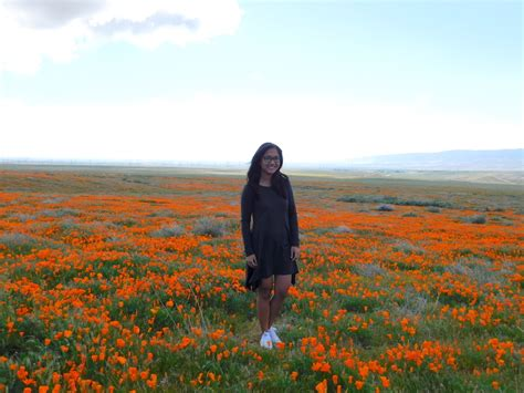 Country Backyards When Poppies Pop At Antelope Valley California Poppy