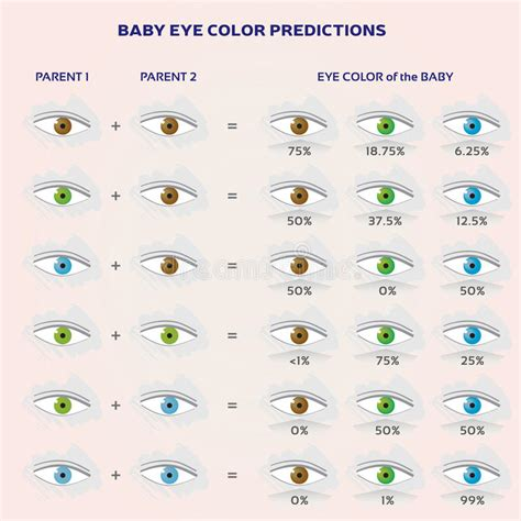 baby eye color predictor baby eye color chart predictor baby eye color prediction