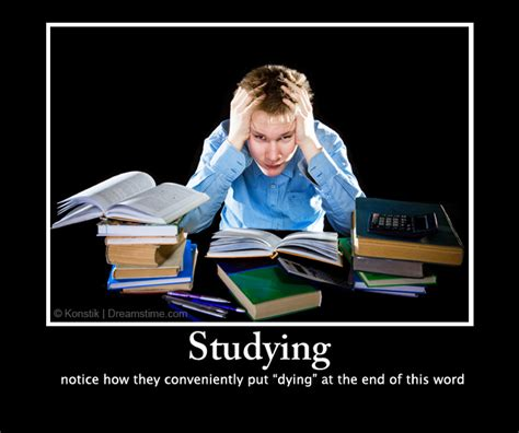 Studying Meme - funny study memes www imgkid com the image kid has it