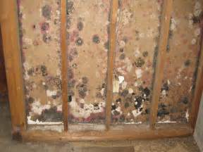 Kill Bathroom Mould How To Kill Mold With Black Mold Removal Bleach Apps