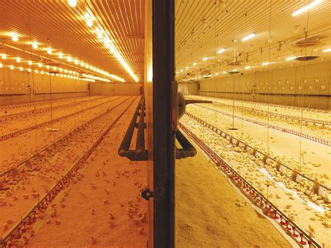 poultry farm lighting system meltron ip67 sealed led lighting system meltron